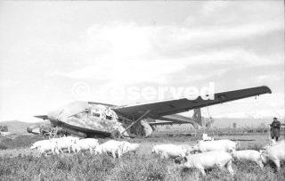 Grosseto glider Gotha Go 242 swine herd_wwii