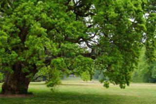 la-quercia-caduta-parafrasi